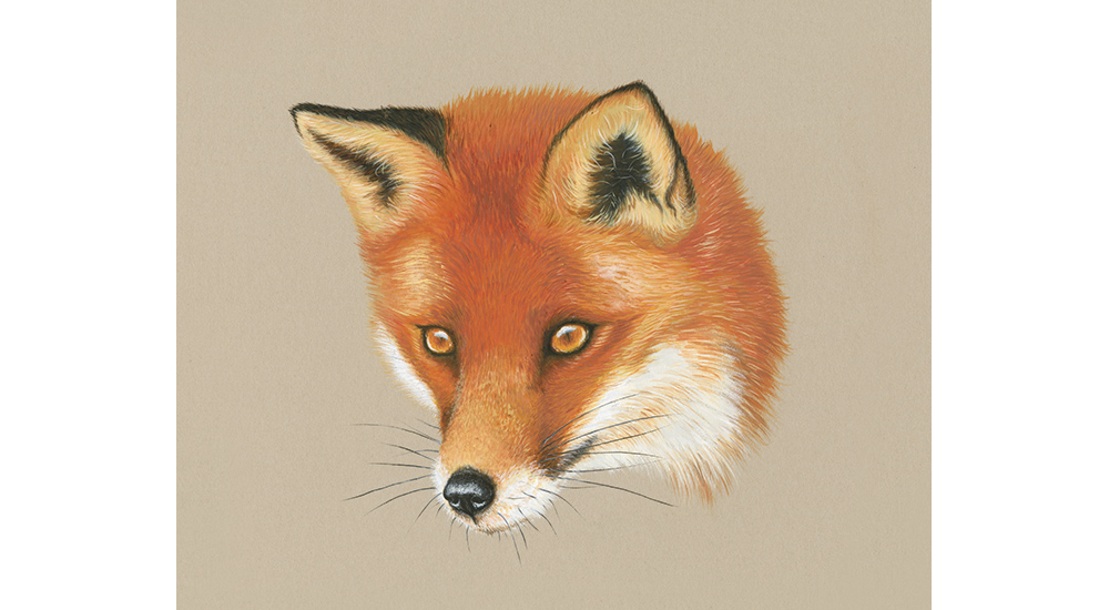 Red Fox by Clare Villar